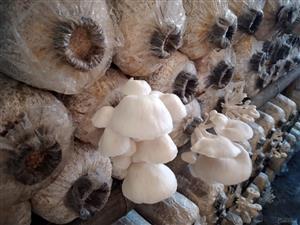 Mushroom Farming Based on the Internet of Things