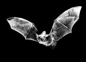 π?pistrelle - a Scanning Bat Detector