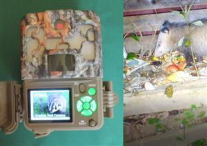 White LED PCB for Conversion of IR Trail Camera to White Flash